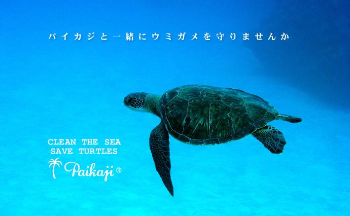 ウミガメ保護活動